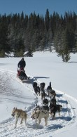 Winterhawk Dogsled Adventures